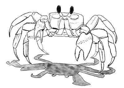 Crab sketch, digital