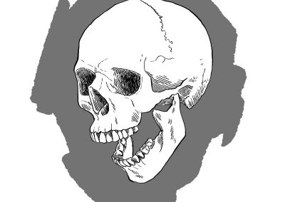 Skull study in gray, digital